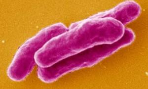 Заболеваемость туберкулезом сократилась во всем мире