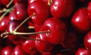Такая бесценная ягода – вишня