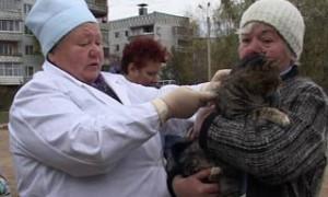В Смоленске прошла выездная вакцинация домашних животных от бешенства