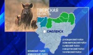 Охотхозяйства Смоленской области проверяют в связи с угрозой африканской чумы