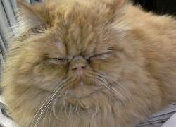 Как кошка лечит болезни