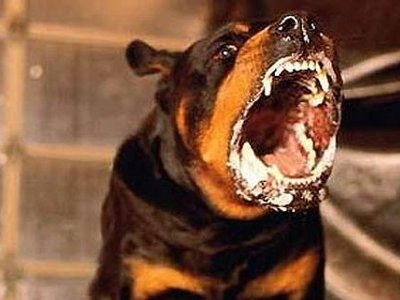 На Смоленщине резко ухудшилась ситуация с бешенством животных