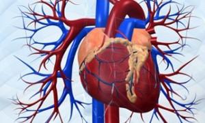 Продолжительность жизни пациентов с пересаженным сердцем растет