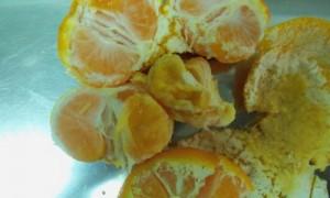 В хорватских мандаринах Россельхознадзор обнаружил средиземноморскую муху