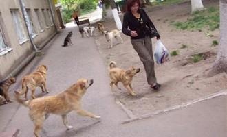 Бешенством смолян заражают домашние собаки