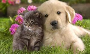Домашние животные могут нанести вред психике человека