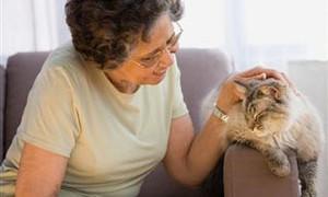 Кошка вызывает аллергию у пожилых женщин