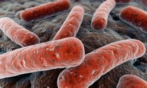 Обнаружена ключевая молекула антибиотикоустойчивости возбудителя туберкулеза