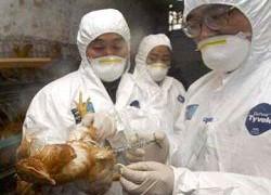 В Южной Корее зафиксирован первый случай птичьего гриппа