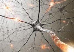 У больных рассеянным склерозом появилась надежда на эффективное лекарство