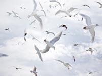 Главными переносчиками паразитов оказались морские птицы