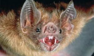 Ученые установили причину «оседлости» ретровирусов