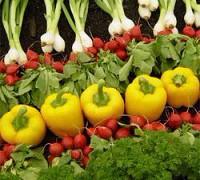 Овощи могут защитить поджелудочную железу от панкреатита