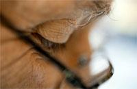 Проблемы со зрением, связанные со старением, можно предупредить