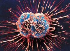 Вирус против рака