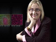 Мозг шизофреника сам пытается вылечиться от болезни, выяснили эксперты