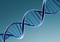 ДНК-тест на определение отцовства: делать или нет?