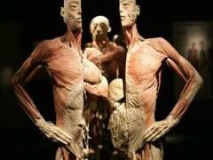 10 интересных подробностей о нашем организме