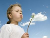 Найден способ борьбы с аллергенными растениями