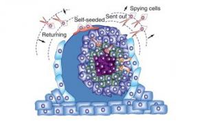 Международная группа ученых выдвинула новую концепцию исследования рака