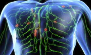 В меланоме обнаружены повышающие выживаемость пациентов «лимфатические узелки»