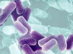 Бактерии – средство диагностики