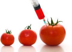 «Наколотые помидоры»: скандал вокруг ГМО