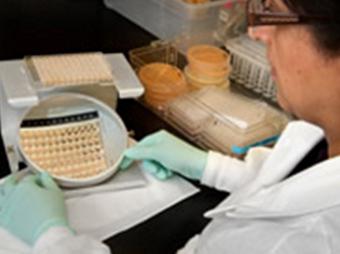 В США от грибкового менингита умерли 28 человек
