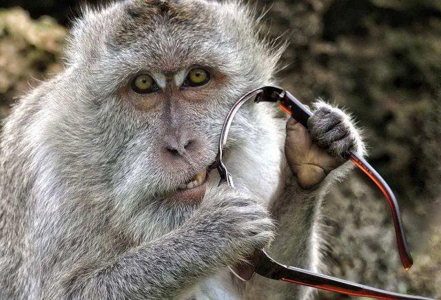 Новый ген объясняет, как люди эволюционировали из обезьян