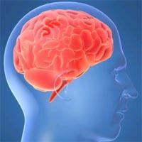 Новые лекарства повысят чувствительность опухолей мозга к препаратам