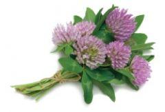 Менопаузу можно лечить растительными препаратами