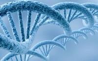 Ученые обнаружили в геноме человека «четвертную спираль» ДНК