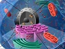 Научный прорыв позволил раскрыть секрет редкого мышечного заболевания