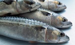 Масштабное исследование доказало связь рыбы в рационе с долголетием