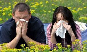 До 75% астматиков страдают от аллергии, говорят исследователи