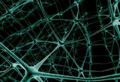 Новый тип клеток кожи отвечает за аллергическую реакцию