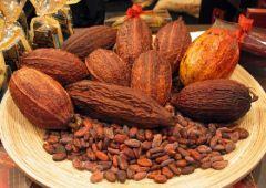 Какао снижает воспаление и поможет при ожирении