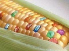 Почему не стоит есть ГМО?