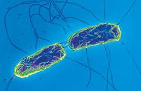 В Прикамье локализовали очаг брюшного тифа