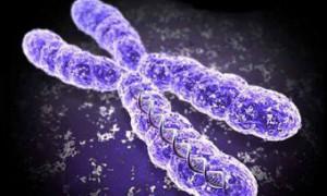 На женскую половую хромосому возложили ответственность за мужское бесплодие