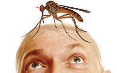 Ужаления и укусы насекомых – повсеместное явление летом