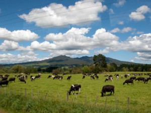 Руководство Fonterra извинилось за ботулизм в молочных продуктах