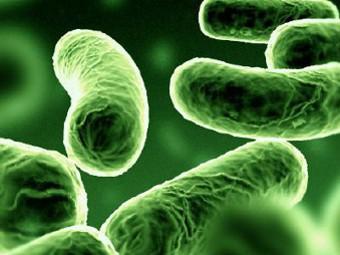 Снижать вес предложили с помощью кишечных бактерий