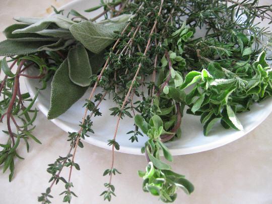 Древние люди знали лекарственные растения, делают вывод ученые