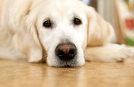 Существует ли польза от домашних животных?