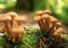 Чем полезны грибы?