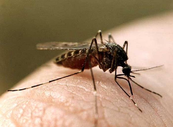 Что хорошо помогает при лечении укусов насекомых