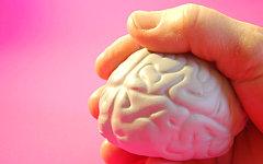 Австрийские ученые вырастили из стволовых клеток синтетический мозг