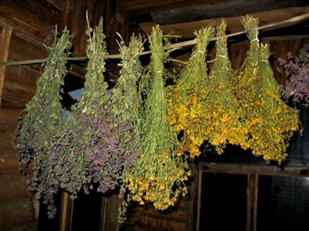 Топ 7 лечебных трав для заваривания