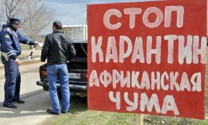 Очередной очаг африканской чумы зафиксирован в Гагаринском районе